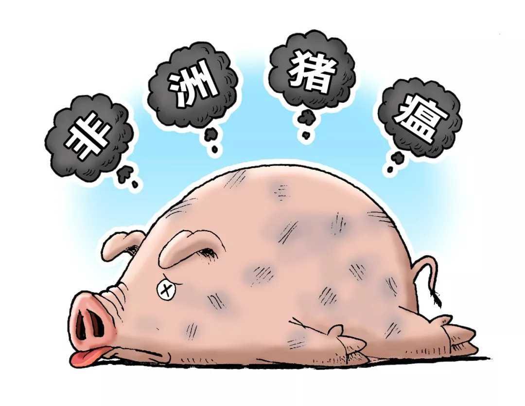 非洲猪瘟病毒能否有效治止? 新型疫苗开发又有重要新突破!-www.8dlove.com奥科集团