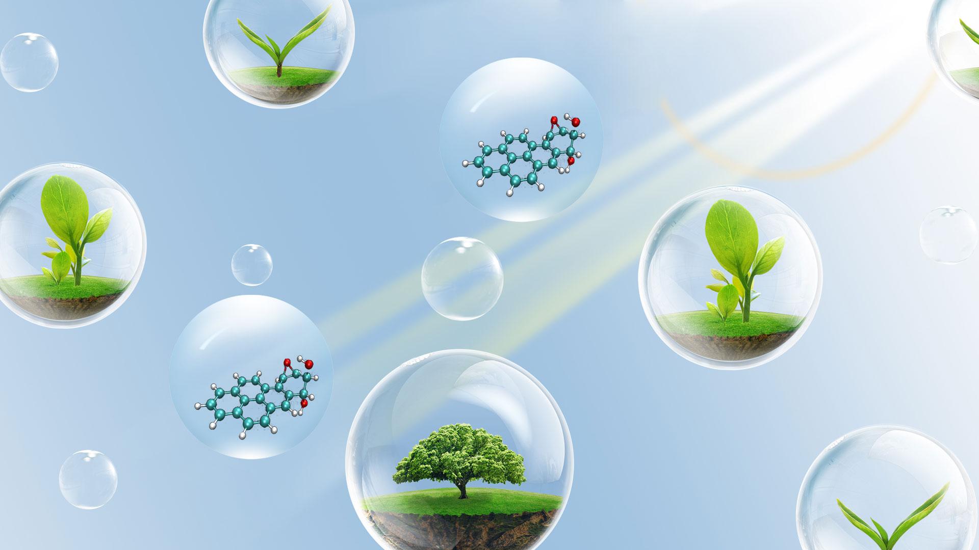 土壤中多环芳烃的检测以及重金属污染与修复研讨会-直播-www.bzwz.com国家标准物质网