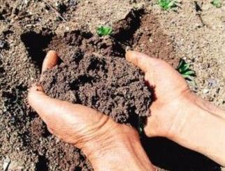 土壤环境质量监测现状及发展趋势