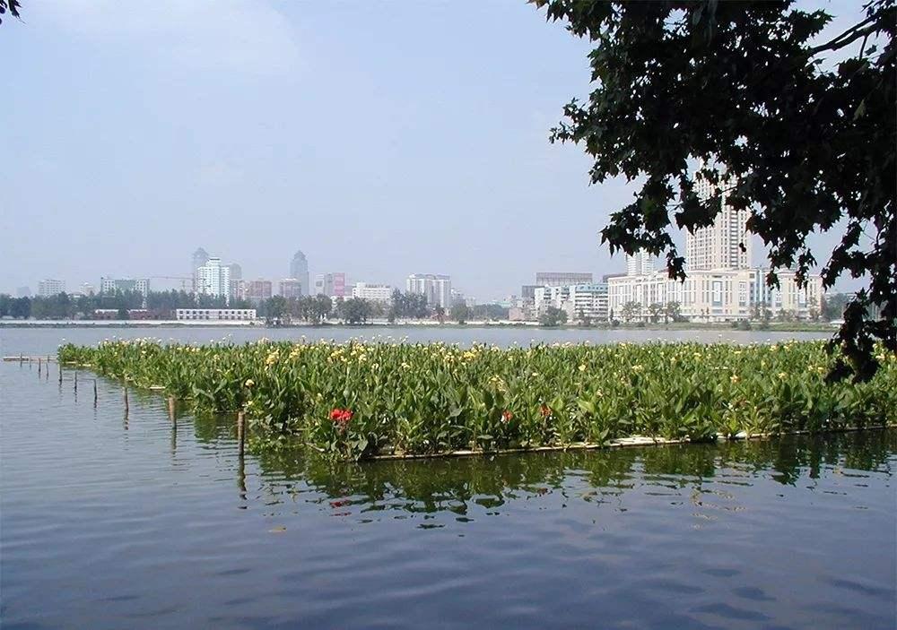 城市浅水湖泊沉水植物生长控制-www.bzwz.com伟业计量