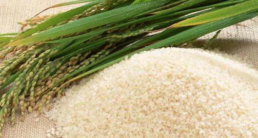 大米蛋白资源开发利用现状(二)