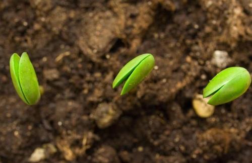 不同土壤盆栽施硫对油菜 、大豆的效应(二)-www.bzwz.com伟业计量