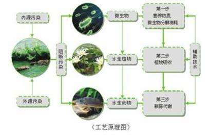 微生物强化技术修复黑臭水体的效果研究-www.bzwz.com伟业计量
