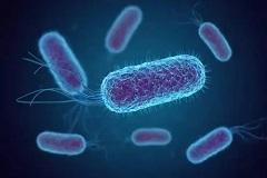 韩国发布了预防大肠杆菌食品中毒的通知