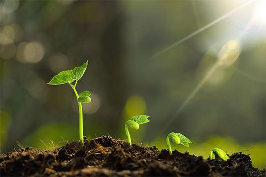 土壤治污新标准即将实施 高效液相色谱法来帮忙-www.bzwz.com国家标准物质中心