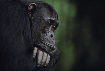 Apes can tell when you've been duped-www.bzwz.comAoke Co., Ltd.