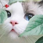 彭舟舟-会员头像-www.bzwz.com伟业计量